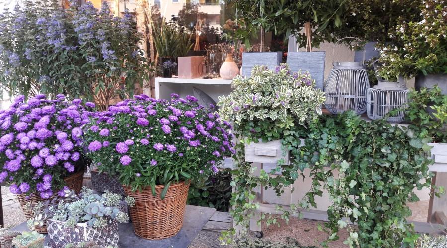 Boutique la fontaine fleurie, fleuriste à Bourgoin et à Ruy